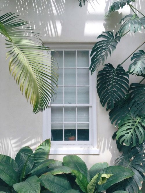 window surrounded by palm leaves