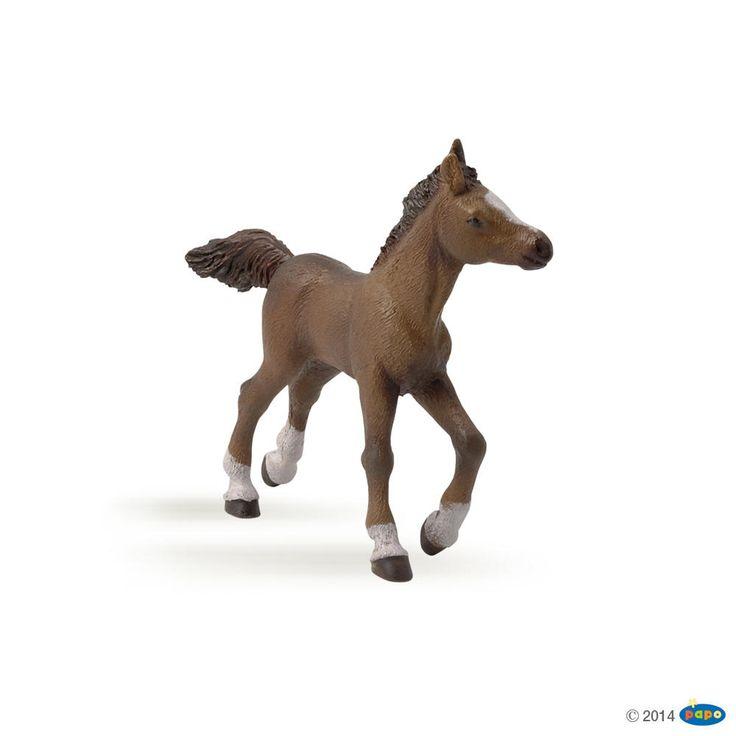 #transformer PAPO Arabian colt / Anglo Arab Foal