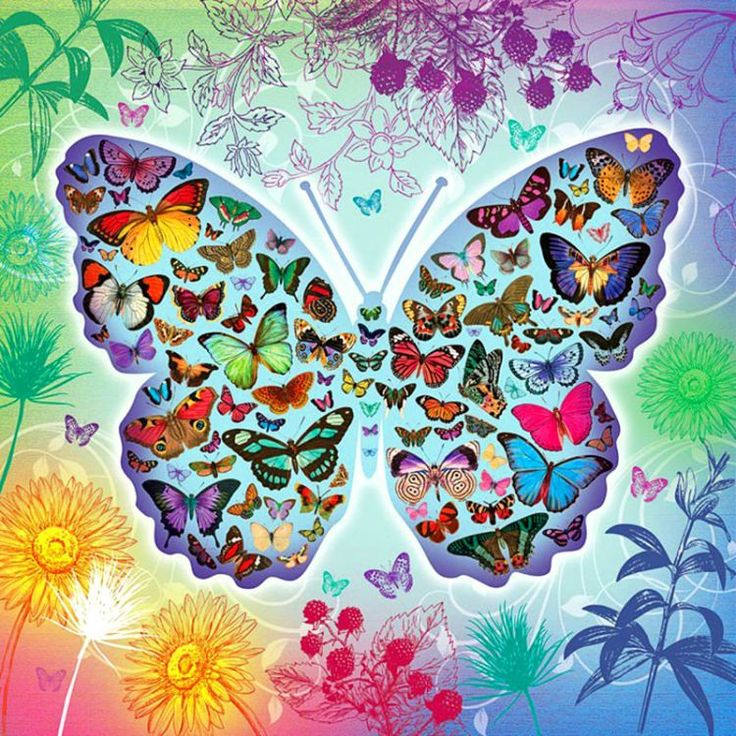 Butterflies in Butterfly