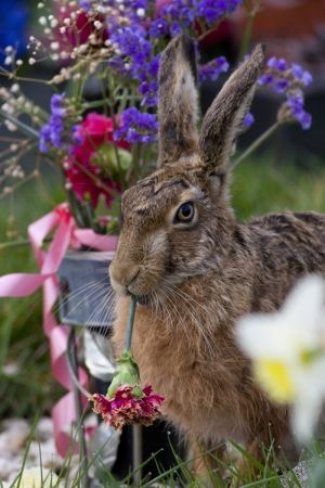 British Wildlife Photography Contest