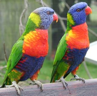 100 best parrots images on pinterest beautiful birds animals and nature - Blauwe agency ...