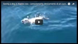 L'emozionante ritrovamento di un cucciolo di labrador a Napoli.