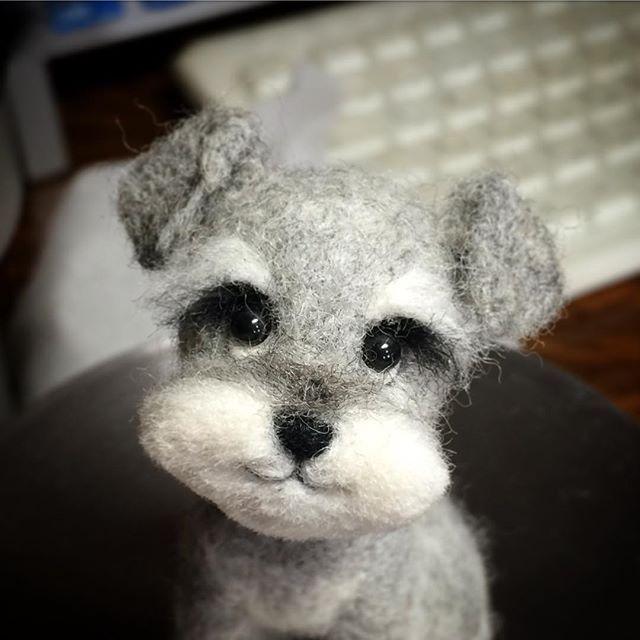 Cute Needle felted project wool animal dog Schnauzer(Via @kuufelt)