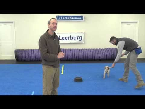 Puppy Touch Pads with Mark Keating