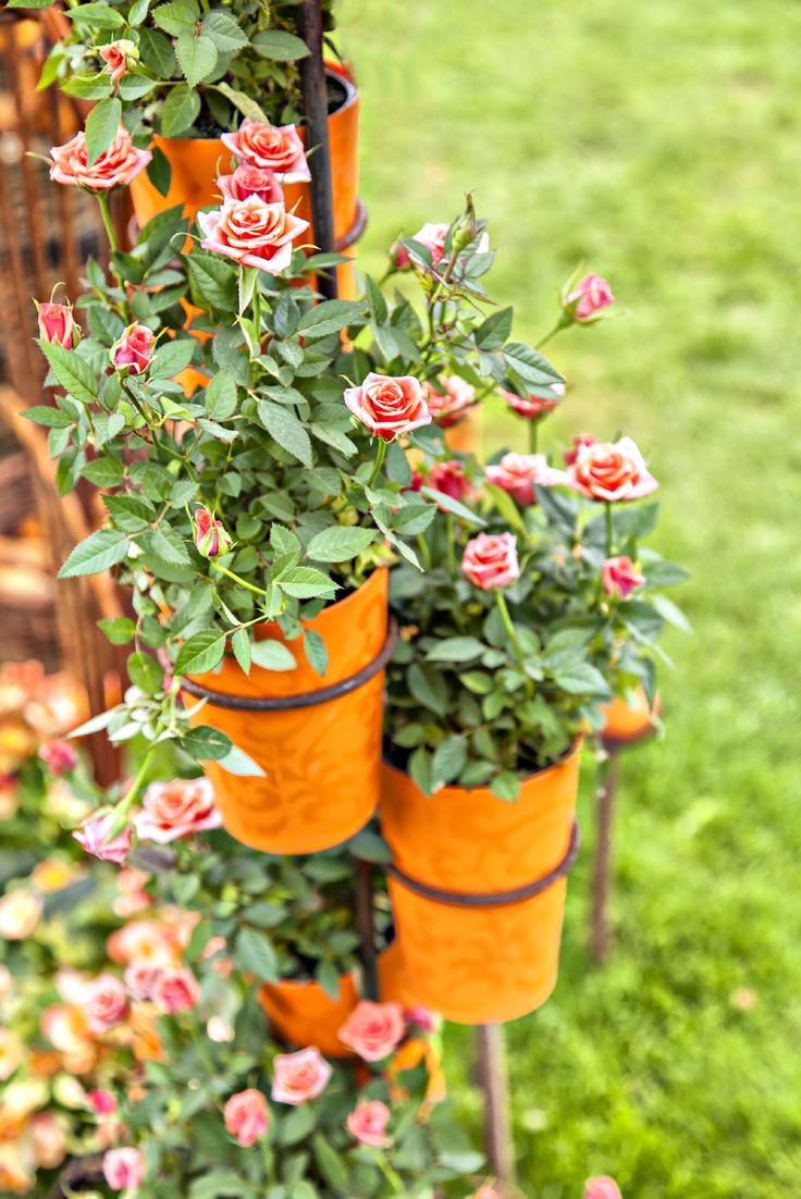 Rose garden ideas pictures - The 25 Best Growing Roses Ideas On Pinterest Prune Ideas Roses Garden And Rose Plant Care