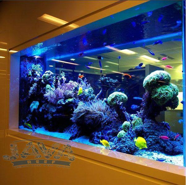 jasa pembuatan awuarium air laut untuk restoran