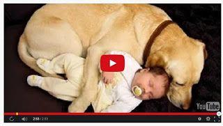 Buono e Sano: BIMBI E ANIMALIBellissimo #video di #bambini e #animali insieme... #Tenerissimi!!! http://buonoesano.blogspot.it/2014/11/bimbi-e-animali.html