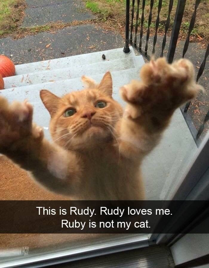 21 Silly Snaps Of Cats Bein Cats Cute Animals Funny Animals Funny Animal Pictures