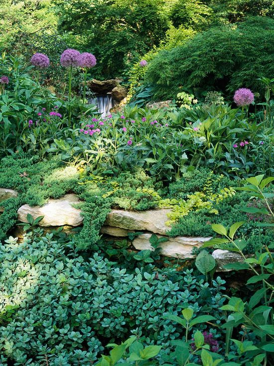 dry stack wall with naturally trailing and clamoring plants.. and a waterfall peeking through the alliums...
