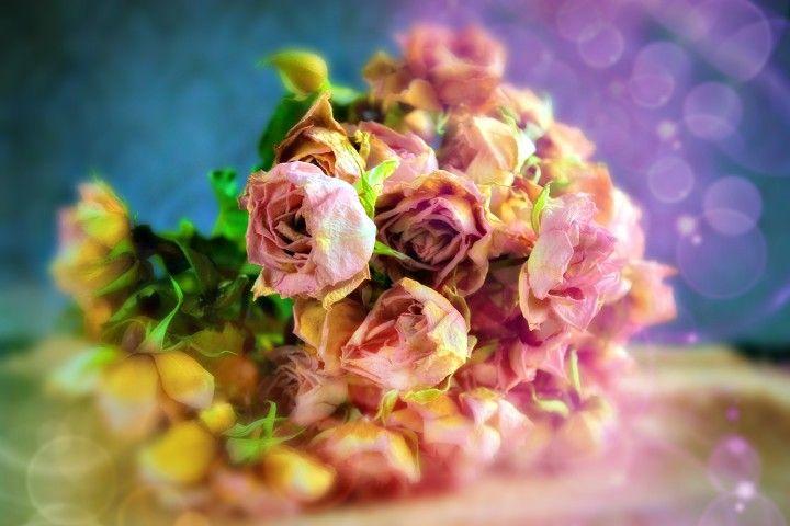 roses, bouquet