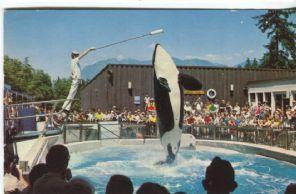 Natural Colour Productions Postcard Vancouver Public Aquarium, Stanley Park, Vancouver, B C, M2A, Killer Whale