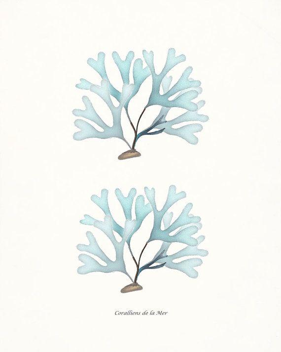 Antique French Sea Kelp and Sea Shell Collage Print - Wall Decor Art Print - Soft Aqua - 8x10