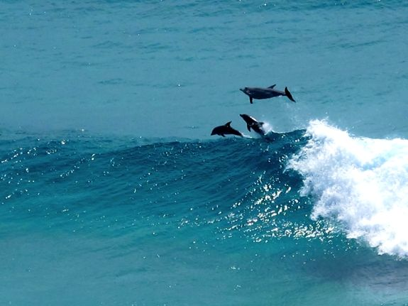You can spot plenty of marine life from the lookouts on North Stradbroke Island. #dolphins