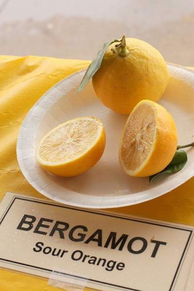 Bergamot Oil Side Effects and Skin Irritation  Bergamot oil is derived from bergamot fruit. This oil has extensive benefits in aromatherapy and medical field. However, excess use may result in bergamot side effects.  http://allergy-symptoms.org/bergamot-side-effects/