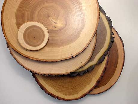 1000 images about tree stump on pinterest stump table for Large tree trunk slices