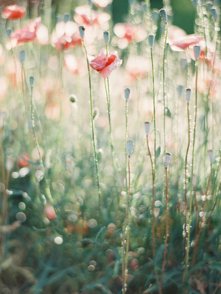 I am one amongst the wildflowers . This is where I belong, this is where my soul roames free ♡
