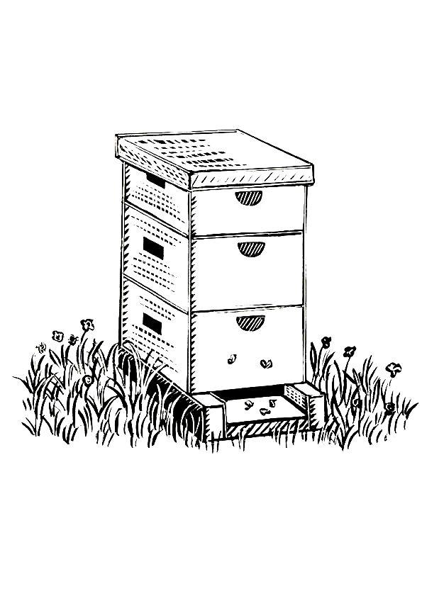 самых пчелы улей картинки разукрашки простейшее исследование