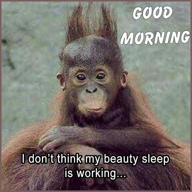 Funny Good Morning Memes For Facebook Instagram Whatsapp Funnygoodmorningmemes Goodmornin Morning Quotes Funny Funny Good Morning Memes Work Quotes Funny