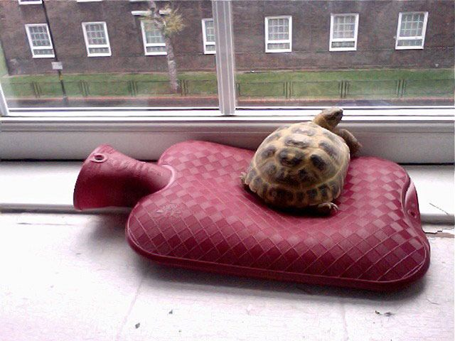 """Tiny pets: tortoise hot water bottle. """"On a cold day, Punasaur watches the world go by from a heated sofa"""""""