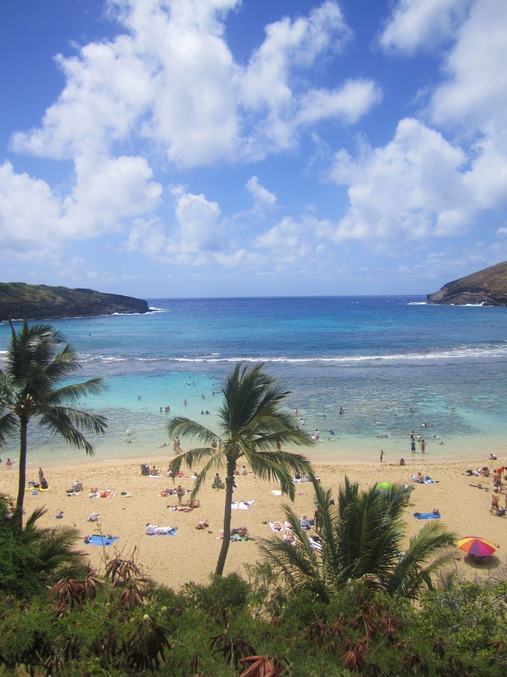 Taken in Hanauma Bay Park  Oahu, Hawaii