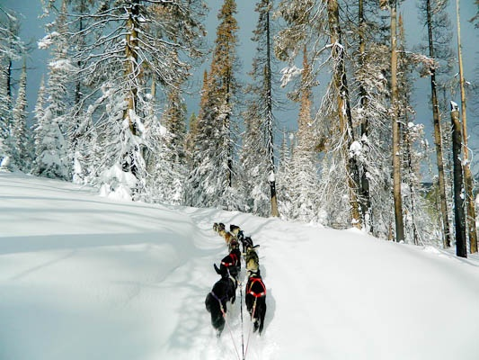 1000  images about Iditarod Race on Pinterest