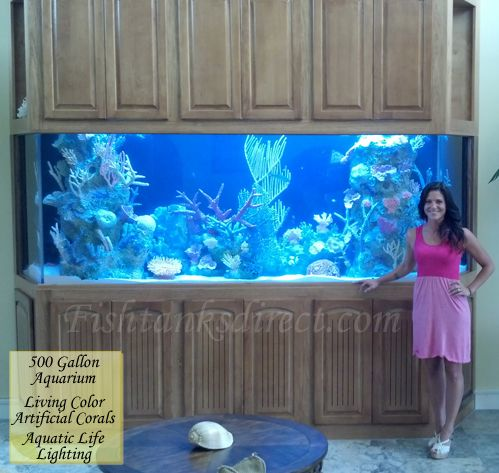 2749 best images about aquarium ideas on pinterest for Fish tanks direct