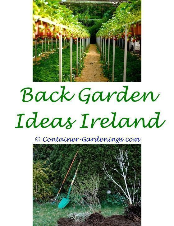 Small Garden Ideas For Beginners Ideas For An Indoor Succulent