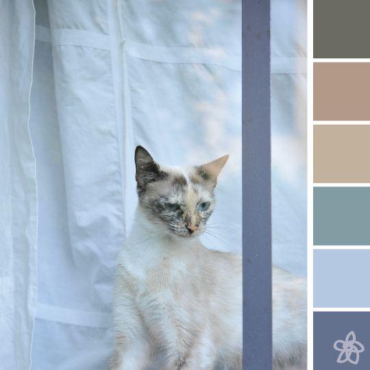 [cat's eye] color palette Mediterranean - july - Jardin joli