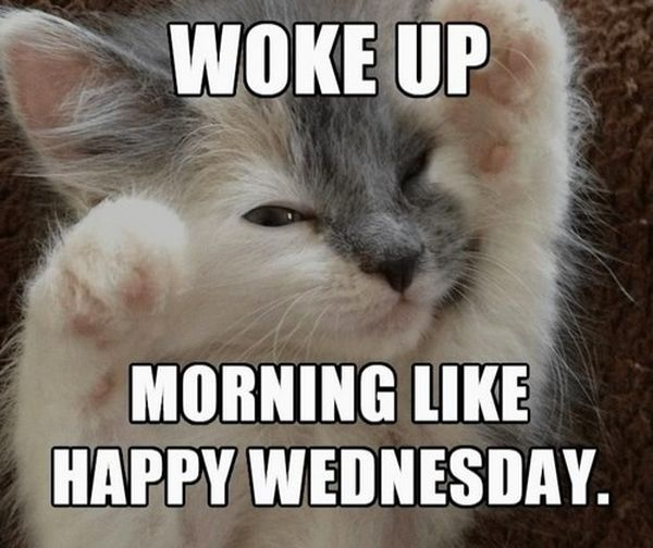 36 Funny Happy Wednesday Memes Funny Wednesday Quotes Funny Wednesday Memes Funny Friday Memes