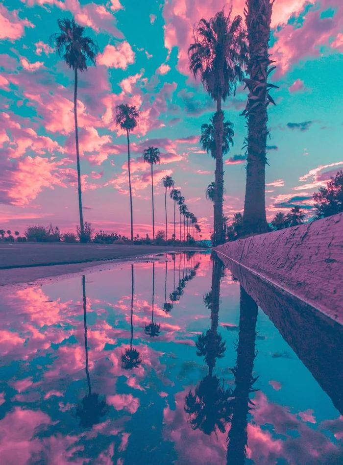 The reflection of palm trees