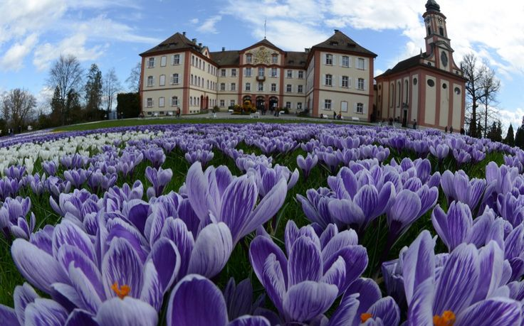 """Mainau Island, Germany Happen to be in Zurich this spring? Hop up to Lake Constance, in Germany's southwest corner near the Swiss border. Mainau Island, affectionately dubbedBlumeninsel, or """"Flower Island,"""" features more than 110 acres of wide paved paths, sweeping lawns, and vast, radiating flowerbeds. While you're there, climb a staircase waterfall brimming with tulips; after you leave, visit a seventh-century castle in nearby Meersburg."""