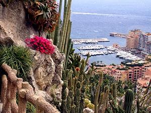 Monaco on pinterest for Jardin exotique monaco