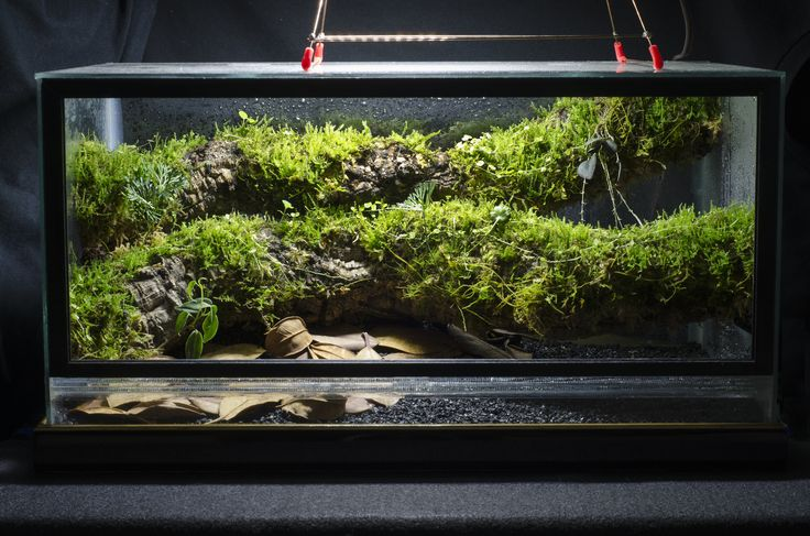 10 Gallon Front-Opening Conversion Epiphyte Branch ... 10 Gallon Dart Frog Vivarium