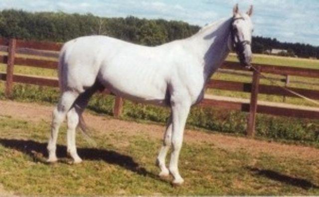 Lurppan iskä, Lear http://www.lwhorse.lv/Horses/Card.aspx?id=4968