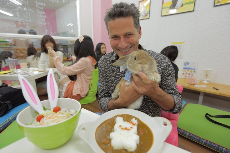 Rabbit Cafe in Nagoya, Japan Cute! I wanna go snuggle rabbits and have yummy Japanese food!