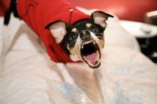 Cesar Millan's Best Tips to Stop Dog Barking