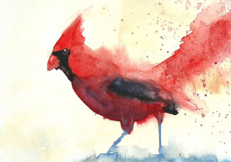 Red Cardinal bird by Medhi.deviantart.com on @deviantART
