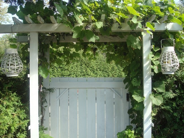 arbour gate with grape vines