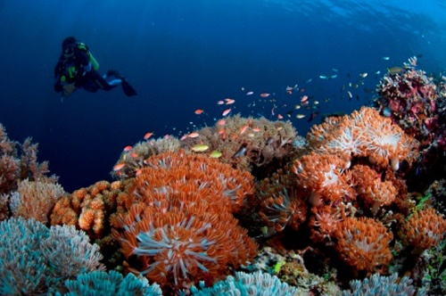 Bira Beach and Dive Sites : World Class Diving in South of Sulawesi Island Indonesia