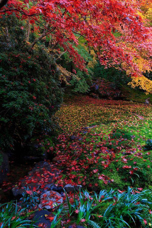 Ruriko-in garden, Kyoto