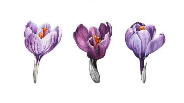 Botanical Portrait II - FLOWER on Illustration Served