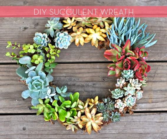 How To: Make a Living Succulent Wreath!