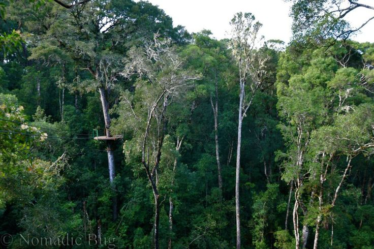 The Tsitsikamma forest canopy, Garden Route, South Africa Nomadic Existence