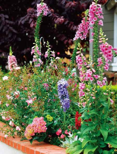 What my back garden will look likeAnalog Colors, Cottages Gardens, Gardens Colors, Colors Border, Color Wheels, Colors Wheels, Foxglove, Gardens Design, Plans Colors