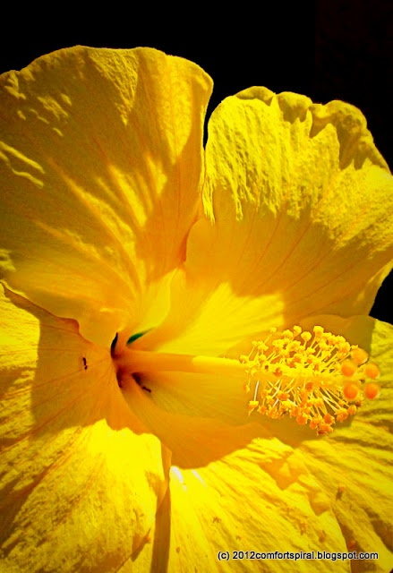 Amarillo yellow energía chakras