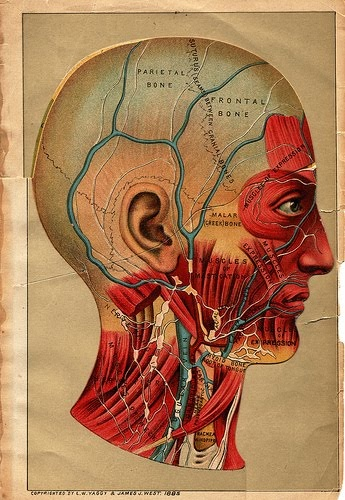 medical illustration using map illustrated appearance