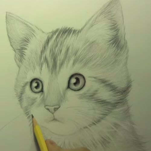 Hoe teken je een Kat?