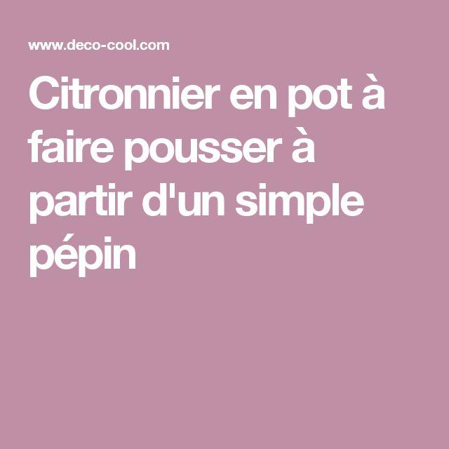 17 best ideas about citronnier on pinterest capri - Planter pepin citron ...