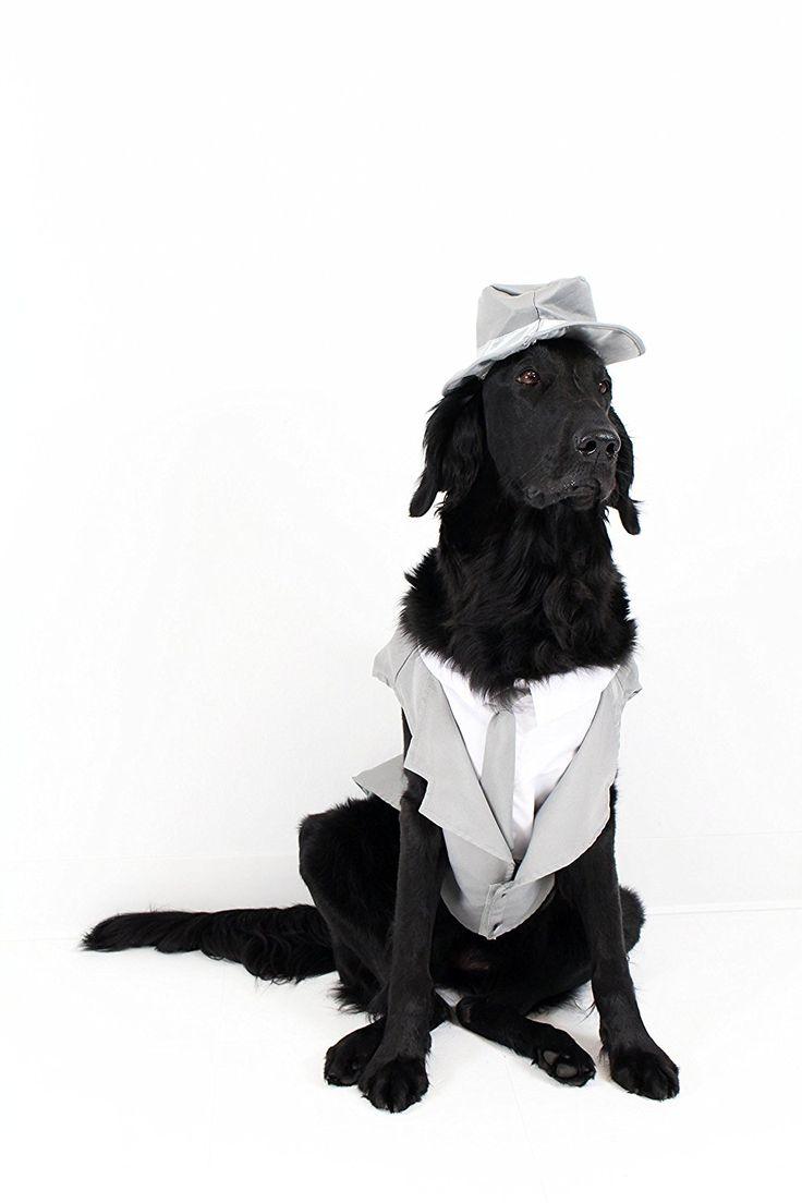 35 besten Doggie Prom Bilder auf Pinterest | Tiere, Friends und Hund ...