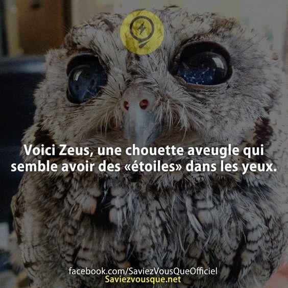 Voici Zeus, une chouette aveugle qui semble avoir des «étoiles» dans les yeux. | Saviez-vous que ?